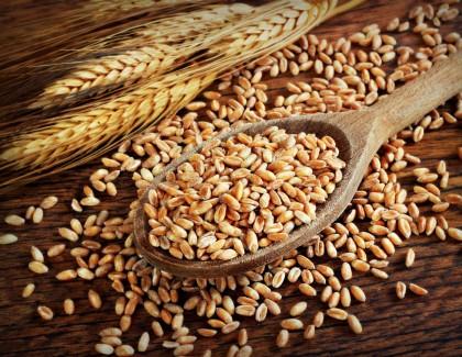 Intolérance au gluten : régime à vie !