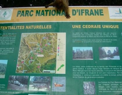 Parc National d'Ifrane : Sensibilisation et Education à l'Environnement