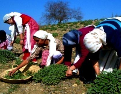 Le Prix Tamayuz pour les initiatives en faveur de la femmes rurale