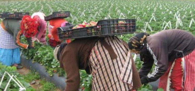 Une marche pour les saisonnières des fruits rouges