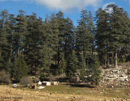 Campagne de reboisement dans le Parc National d'Ifrane