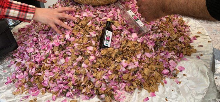 Les jardins exotiques fêtent la rose!