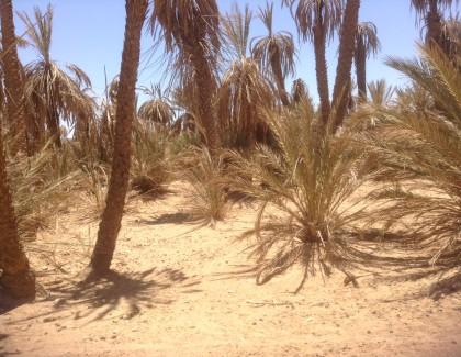 Biodiversité menacée :Nos oasis se cachent pour mourir